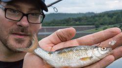 Angeln-mit-totem-Koederfisch