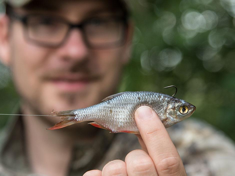 Angeln-mit-Köderfisch